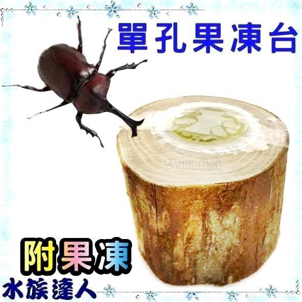 推薦【水族達人】【甲蟲】《單孔果凍台 1入 20-A-071附果凍*1 》鍬形蟲 獨角仙 昆蟲