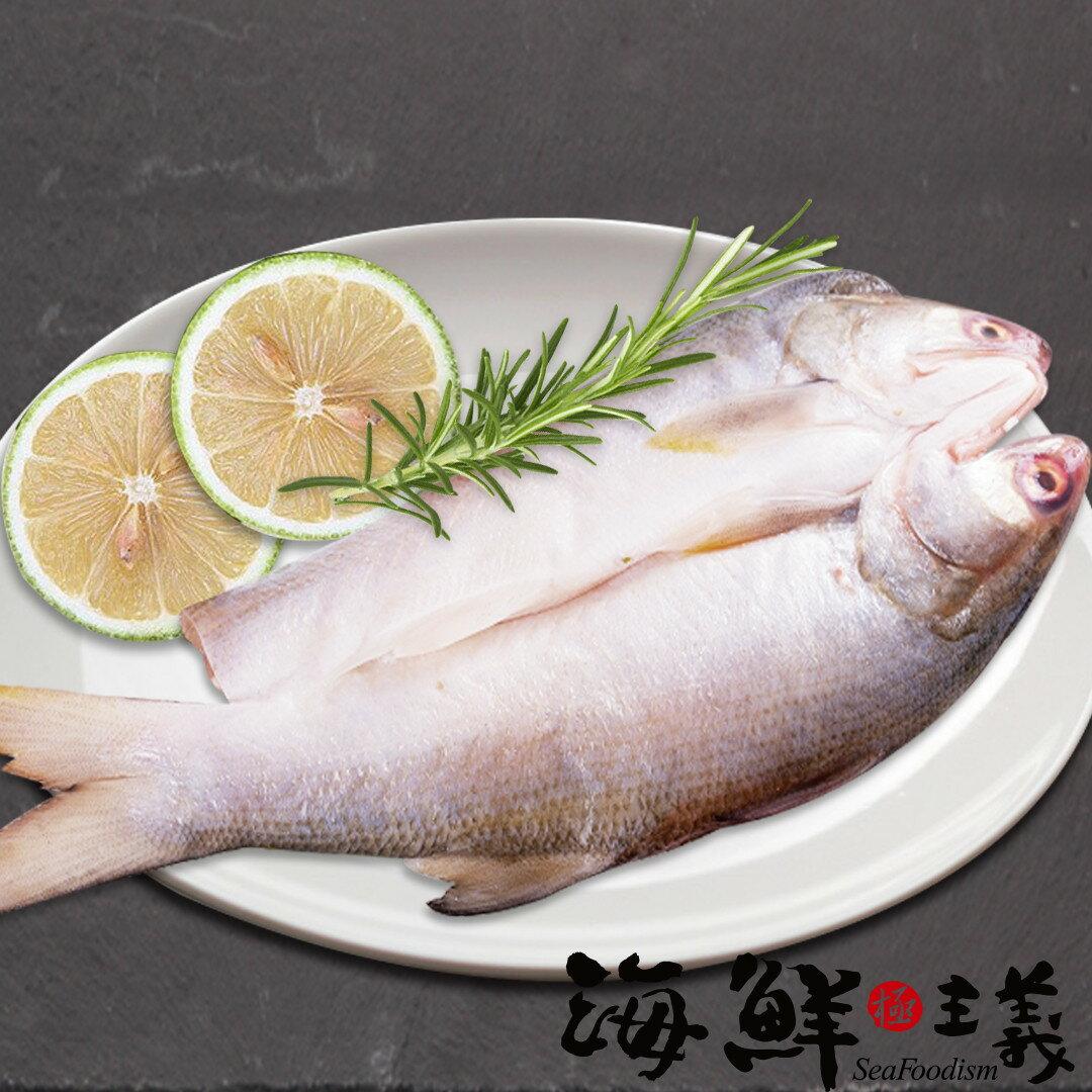 【海鮮主義】午仔魚一夜干(200g/尾) ●肉質結實、油脂豐富 ●不論是清蒸、煎、炸、烤都能嚐到十足美味