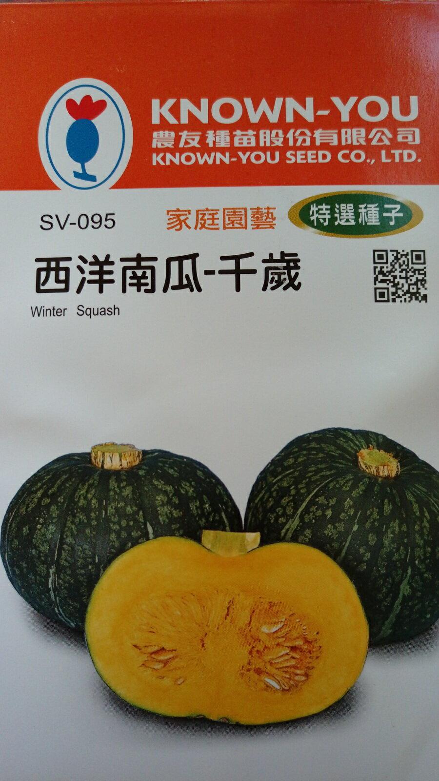 【尋花趣】農友種苗 西洋南瓜-千歲(特選種子) 蔬菜種子 每包約6粒 保證新鮮種子