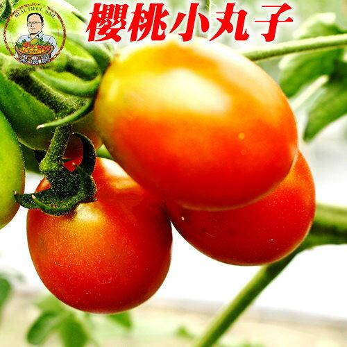 櫻桃小丸子^~小番茄^~無毒蔬果^~爆汁^~脆^~甜到掉淚的高纖蔬果唷^!