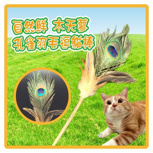 ~力奇~自然鮮 木天蓼孔雀羽毛逗貓棒^(45~NF~031^) ~130元~快來讓貓咪一起
