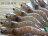 6號 ☆鮮凍白蝦☆禮盒1.15公斤.鮮甜 約69-80隻 / 年菜 烤肉鍋物 蝦類 / 蟹類 / 貝類 - 限時優惠好康折扣