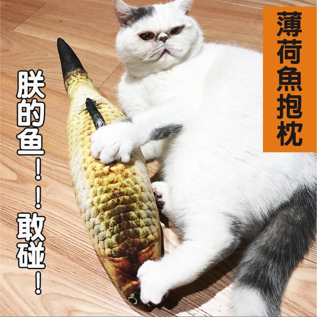 貓專用魚抱枕玩具枕頭 添加貓薄荷 味道可持續6-12個月 仿真鯽魚超Q 布套可拆洗 大隻60公分可躺抱枕 喵星人主子最愛
