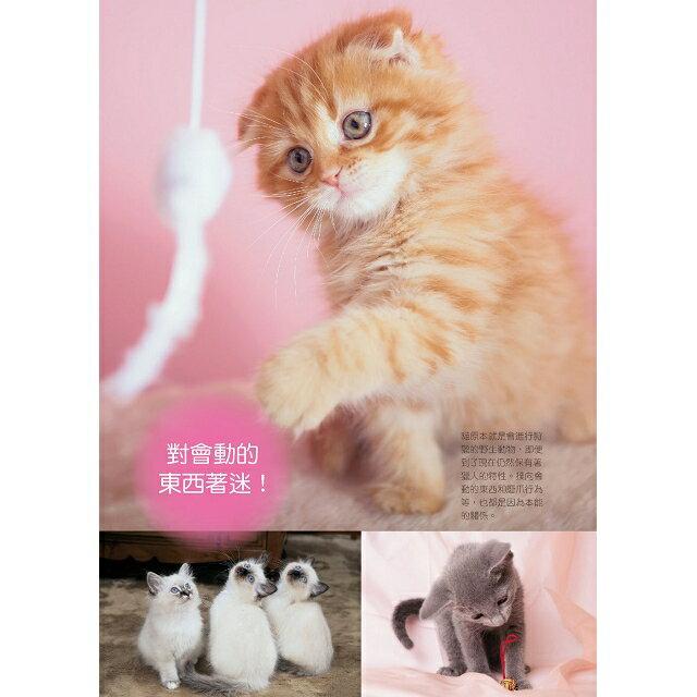 新手養貓必備書  暢銷版 2