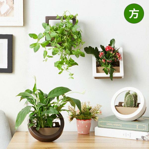 多肉植物 植栽 室內盆栽 創意DIY盆栽 迷你牆上盆栽 方形【SV7450】HappyLife