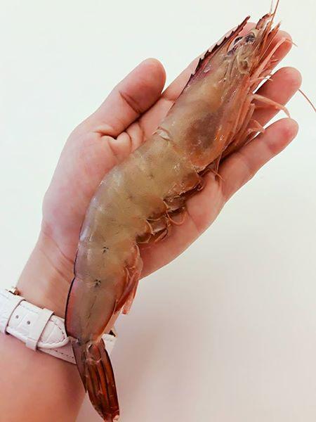 【雞籠好魚】野生大白刺蝦*1包組 (500g/1包,約10-11隻)★餐廳老闆的最愛★肉多味美超鮮甜★