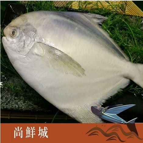 【尚鮮網】特選大白鯧 (750g+-5%)