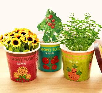 創意微景觀迷你可愛盆栽 / 辦公室桌面生態果蔬植物種子39元【省錢博士】