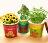【省錢博士】創意微景觀迷你可愛盆栽 / 辦公室桌面生態果蔬植物種子 39元 - 限時優惠好康折扣