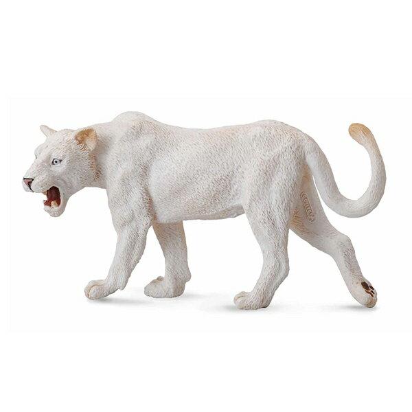 【COLLECTA】白母獅