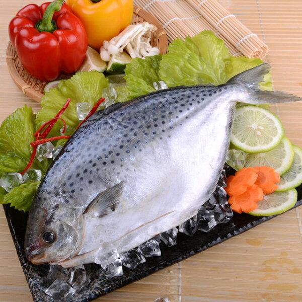 【白北鯧】肉質鮮嫩、料理容易,可以清蒸、油炸、紅燒