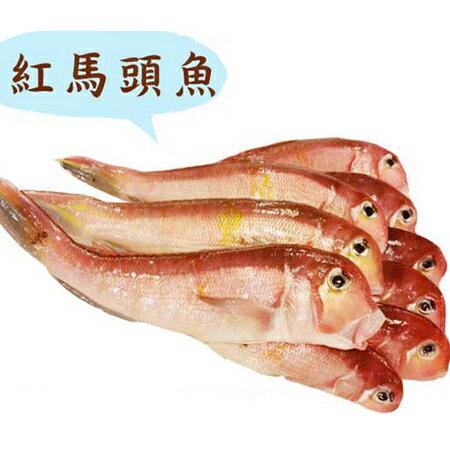 紅馬頭魚 新規格400g(北部冷藏限定)