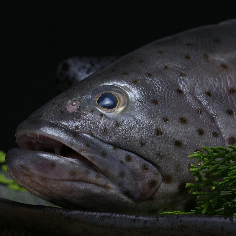 台灣石斑魚