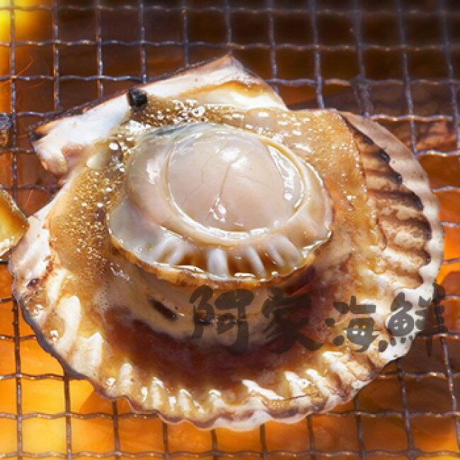 冷凍半殼扇貝 (5顆、6顆入)二種規格/包