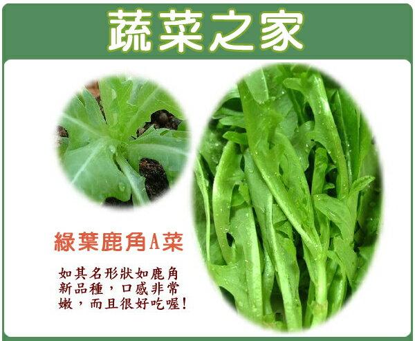 【蔬菜之家】大包裝A40.綠葉鹿角妹仔菜種子50克 (日本進口新品種鹿角A菜)