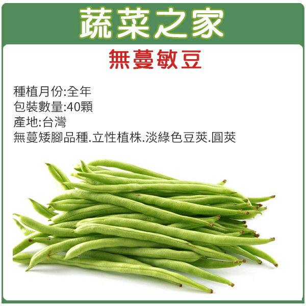 【蔬菜之家】E02.無蔓敏豆(無蔓矮腳品種)種子40顆