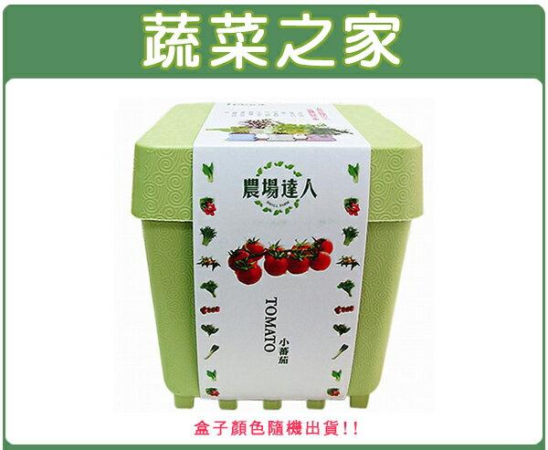 【蔬菜之家004-D10】iPlant小農場系列-小番茄