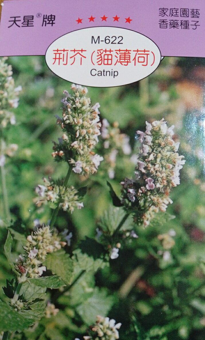 【尋花趣】荊芥(貓薄荷) 香藥草種子 每包約350粒