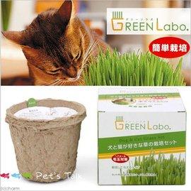 GreenLabo新鮮燕麥DIY貓草盆^(貓貓狗狗 吃^) Pet  ^#27 s Tal