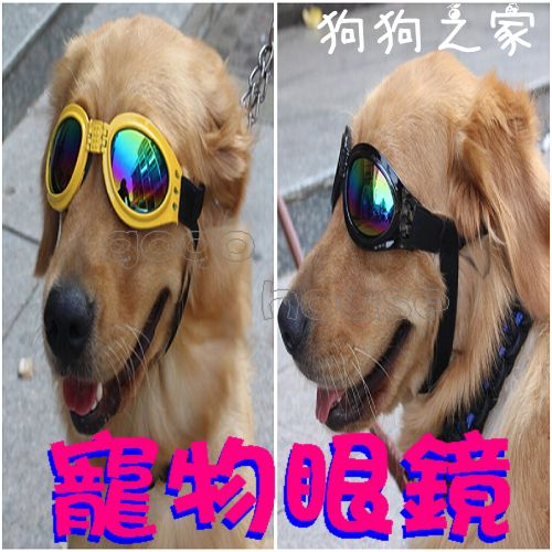☆狗狗之家☆潮狗必備寵物太陽眼鏡 防風 防雨 防護眼鏡 墨鏡(適中大型犬)