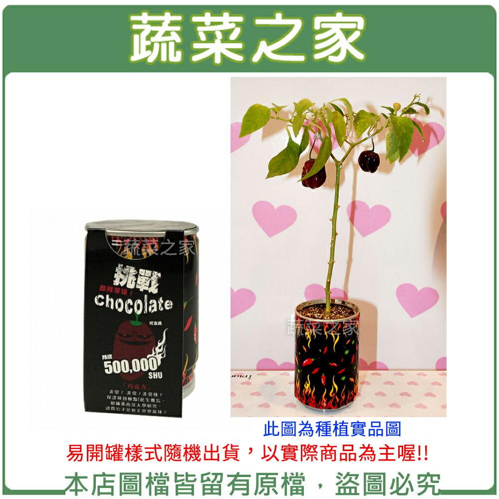 【蔬菜之家004-E16】iPlant易開罐花卉-巧克力椒