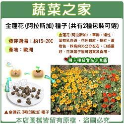 【蔬菜之家】金蓮花(阿拉斯加)種子