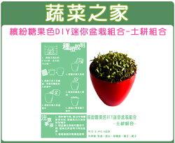 【蔬菜之家004-A02】繽紛糖果色DIY迷你盆栽組合(土耕組合)