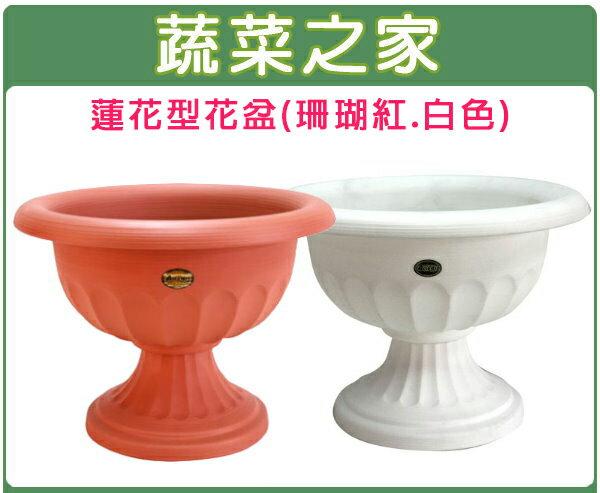 【蔬菜之家005-ROD079】蓮花型花盆-中(無孔)珊瑚紅.白色共2色
