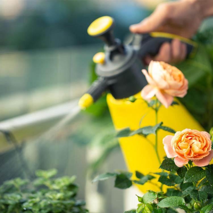 美樂棵噴壺澆水壺帶刻度氣壓式噴霧器澆花種植工具大容量2L