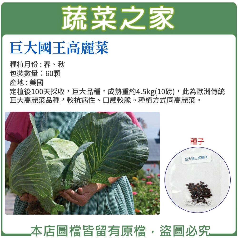 【蔬菜之家】B22.巨大國王高麗菜60顆(巨大品種,成熟重約4.5kg(10磅),較抗病性、口感較脆)
