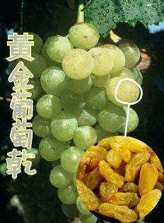 黃金葡萄乾金黃大葡萄乾180g