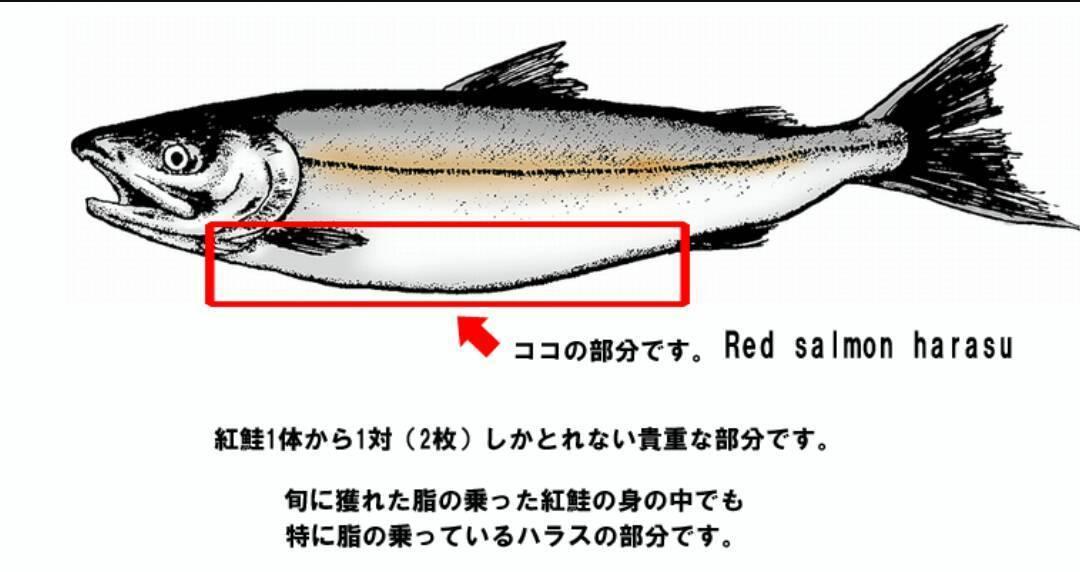 北海道野生紅鮭魚腹肉500g 2