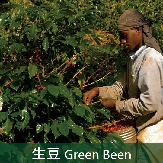《未烘焙生豆》多明尼加加勒比紅翡莊園