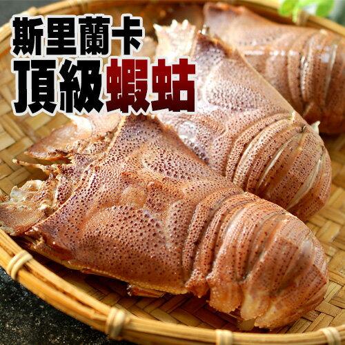 【築地一番鮮】斯里蘭卡頂級蝦姑(200g-250g/隻)