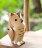 日本 T-Lab 手工原木製 森林動物 L 《 貓頭鷹 / 松鼠 4款任選 》★ Zakka鄉村風 ★ 手腳可動喔 - 限時優惠好康折扣