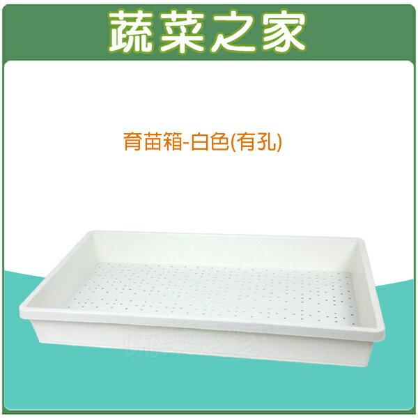 【蔬菜之家005-C86-WI1】育苗箱(有孔)-白色(育苗盤.菜箱.可當四方型栽培盆端盤)