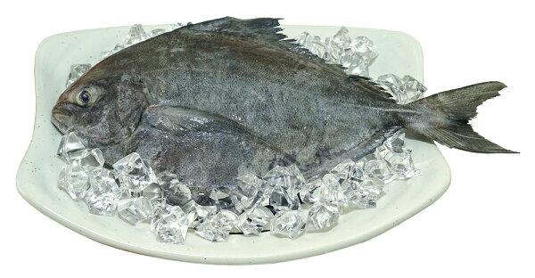 優食網:昌運興隆黑鯧魚★昌運意味濃乎你賺大錢★