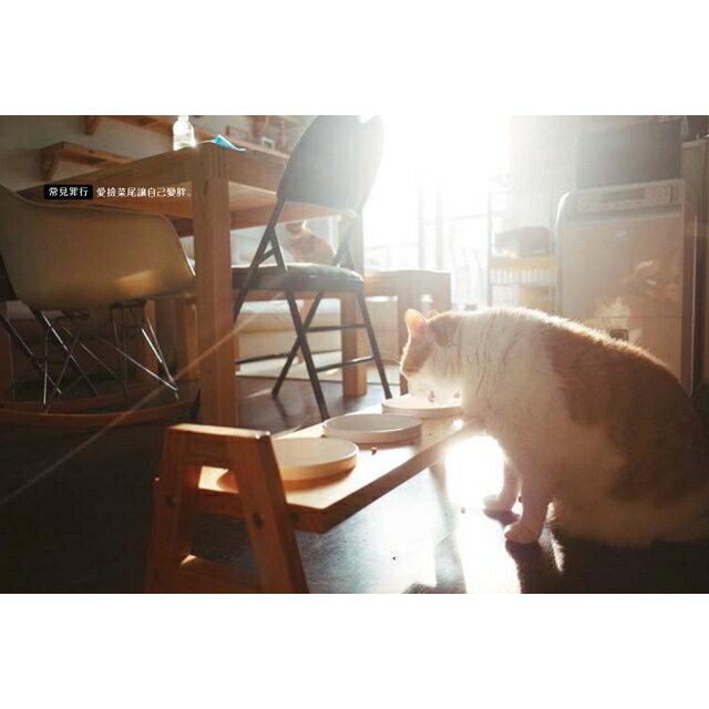 黃阿瑪的後宮生活:貓永遠是對的 4