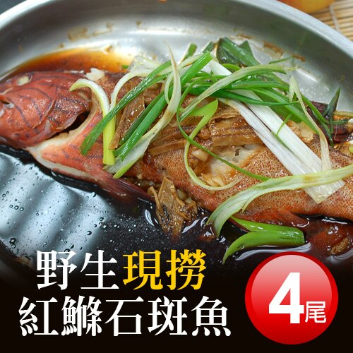 【築地一番鮮】海底紅金-峇里島-野生紅鰷石斑魚4條(450g±50g / 條) - 限時優惠好康折扣