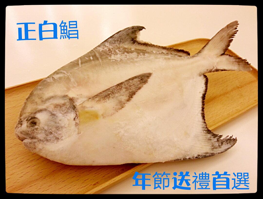 【雞籠好魚】免運!!【萬事興昌3件組】: 3種高級海鮮年菜組(大白鯧/巨無霸軟絲/中明蝦或海熊蝦) 3