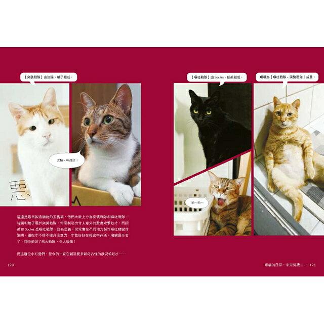 黃阿瑪的後宮生活:貓永遠是對的 8