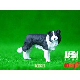 動物星球頻道獨家授權 - 邊境牧羊犬 387203