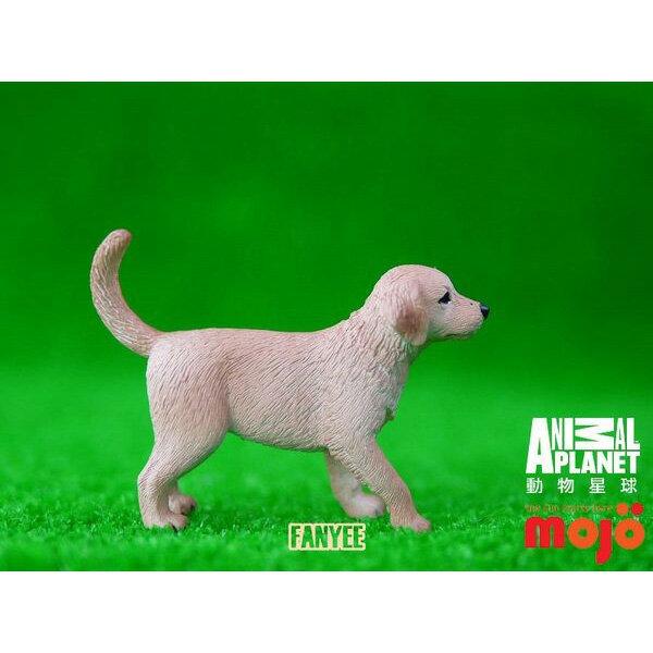 ~MOJO FUN 動物模型~動物星球頻道  ~ 黃金獵犬幼犬