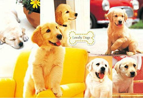 【P2 拼圖】黃金獵犬拼圖 1000片 ( HM100-266 )
