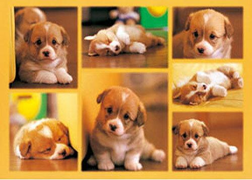 【P2 拼圖】動物系列 - 小狗無辜的臉 520片 拼圖 (HM52-524)