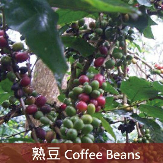 ~福璟咖啡~祕魯 北部高地 佛山咖啡豆 有機 公平貿易