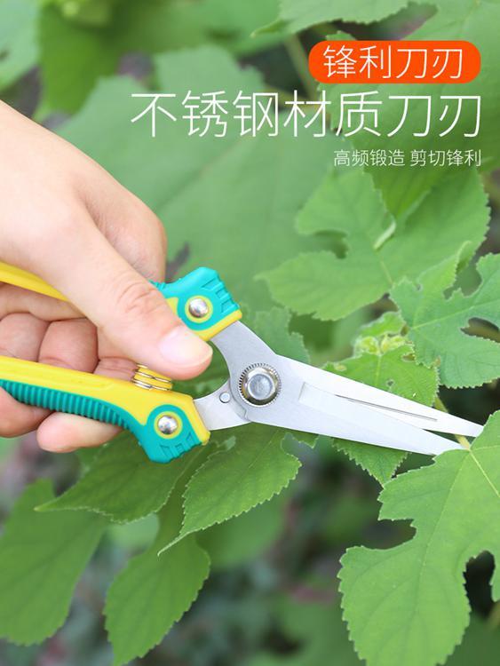 園藝剪 修果剪葡萄枝的專用剪刀采果翹頭稀果剪蔬果剪尖頭水果不銹鋼修枝