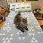Blue cat 藍貓【床包藍底白三角形】單人/雙人熱賣組   舒適磨毛布 台灣製造 8
