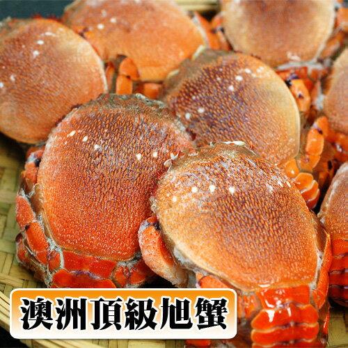 ~築地一番鮮~澳洲母旭蟹1kg  約5~7隻^(小家庭聚餐^) 組