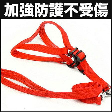 【小樂寵】防護厚軟墊胸背帶+拉繩組 S-L號(中型犬/三色)
